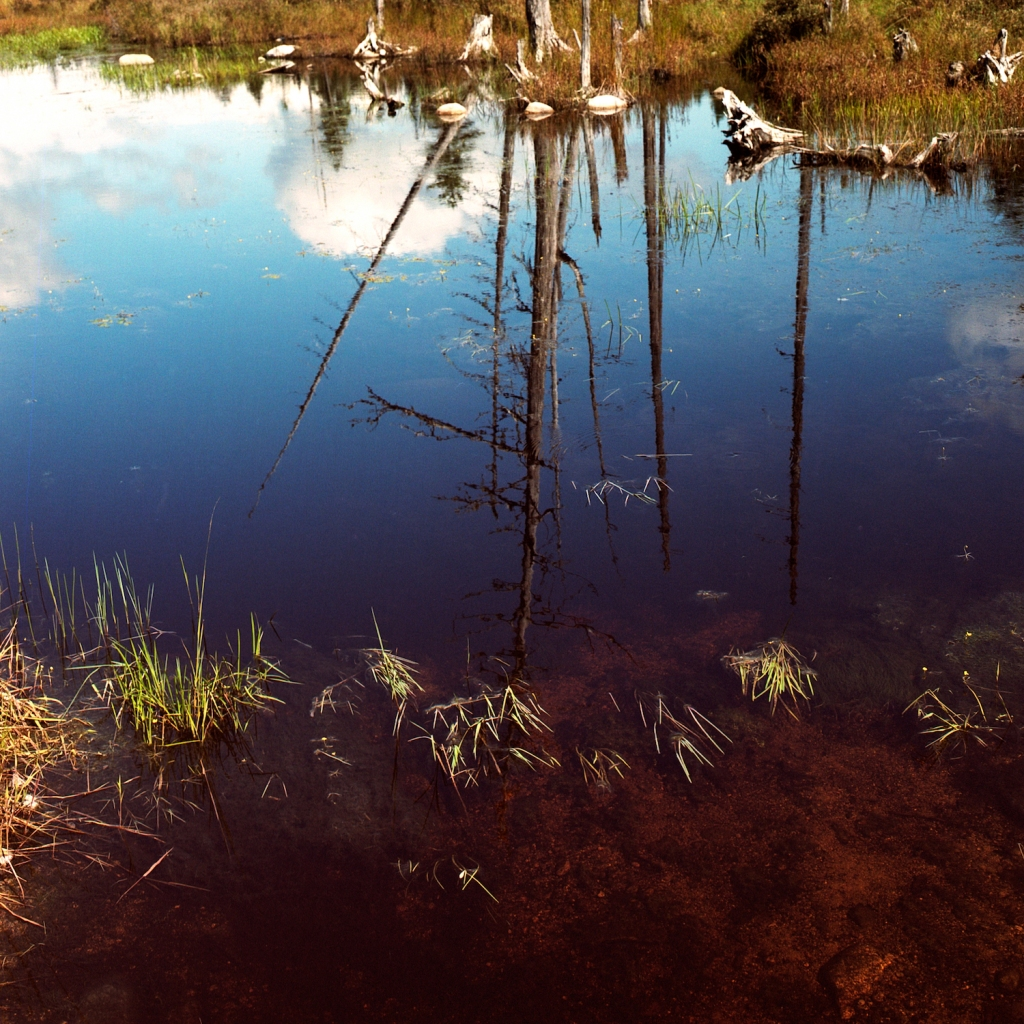 Reflection of denuded trees and clouds in a wetland pond
