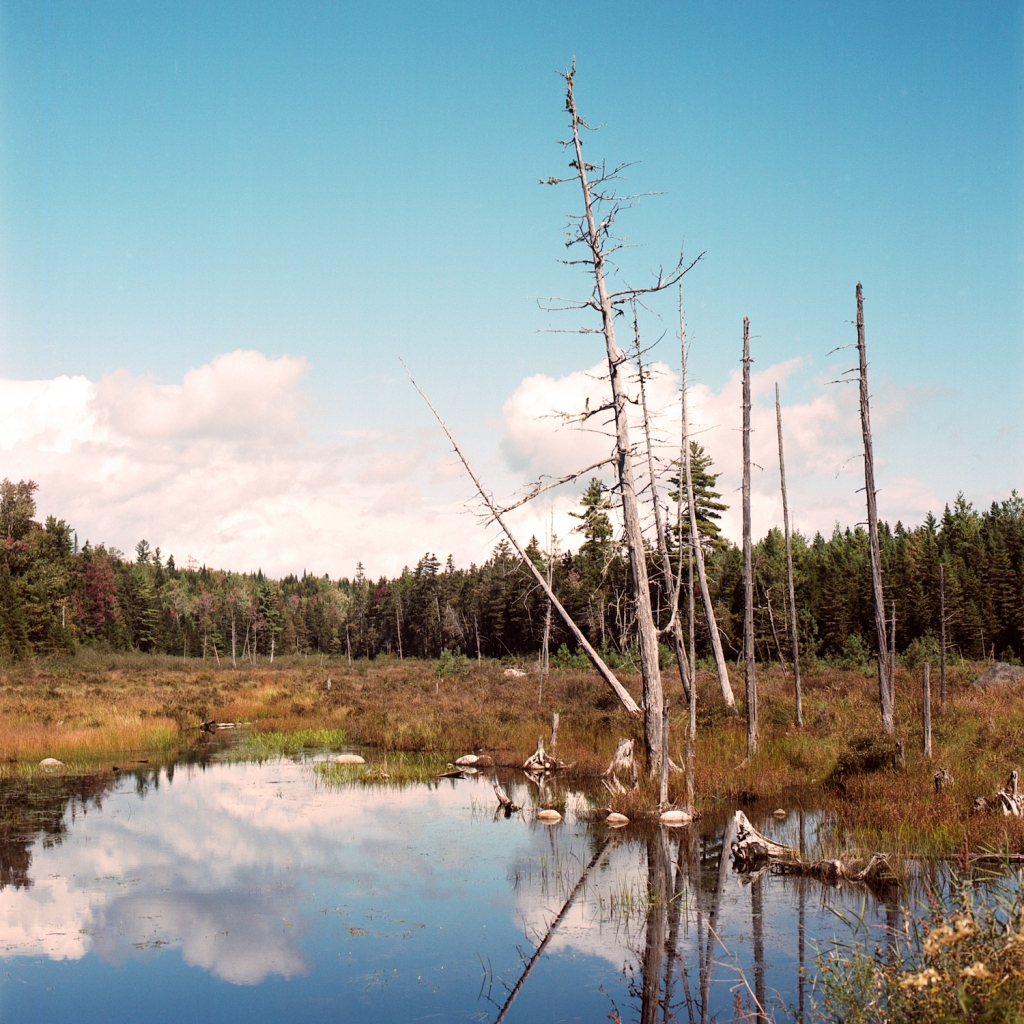 Denuded trees in a wetland reflecting the clouds